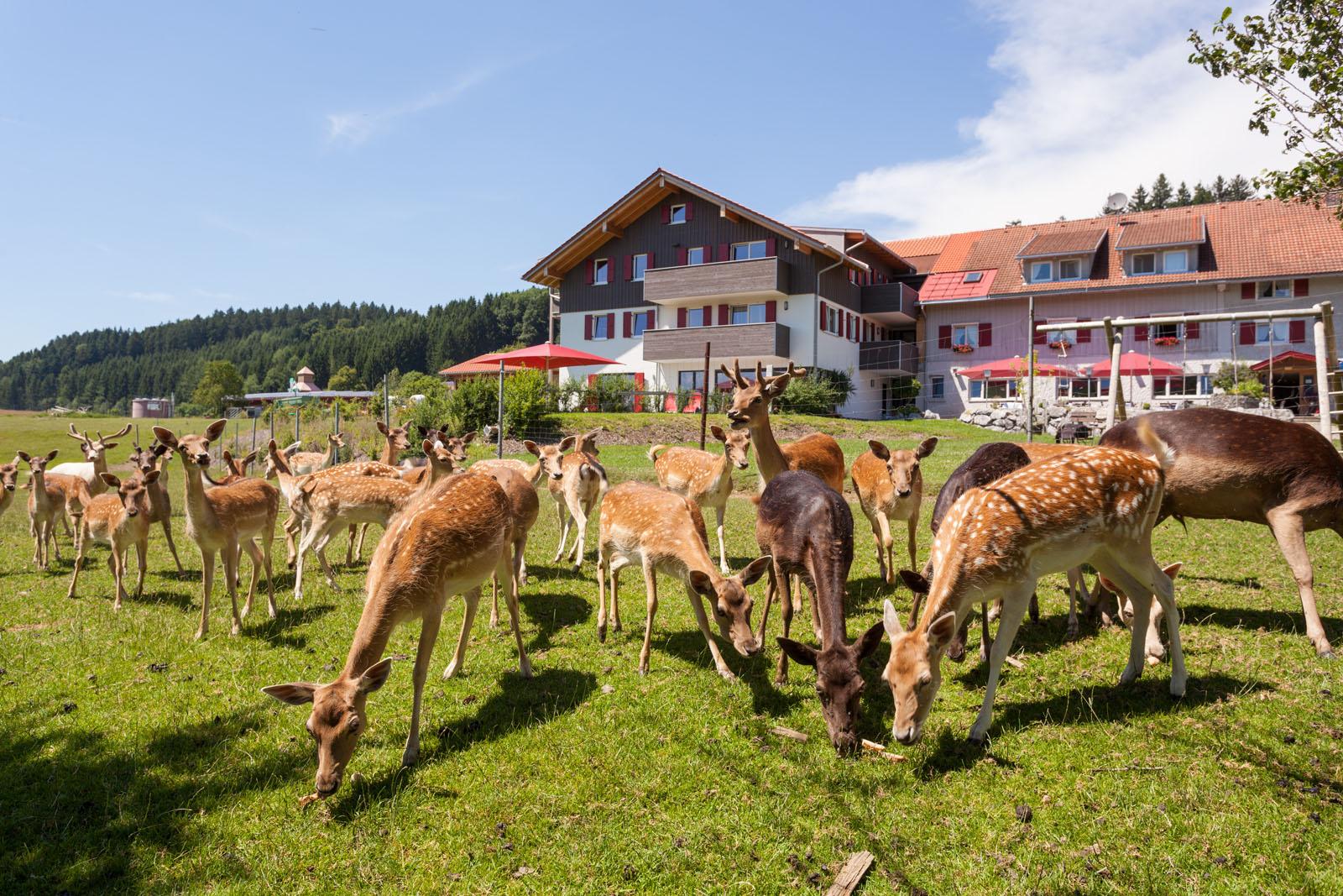 Nature hotel & Spa Sontheim - animal enclosure